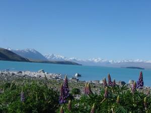NZ 07 Lake Tekapo (34)